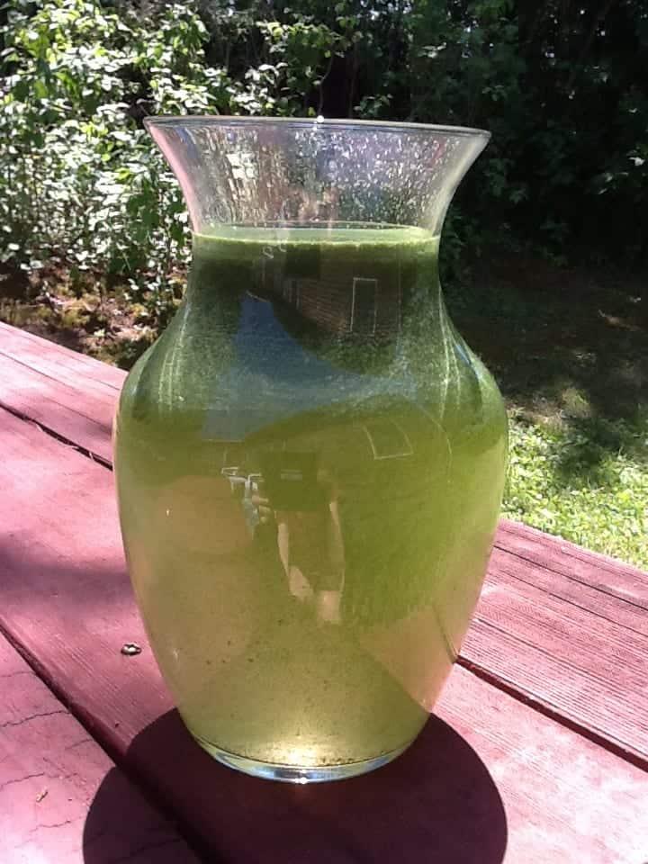 algae jar