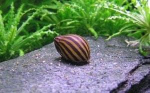 snail jarrarium