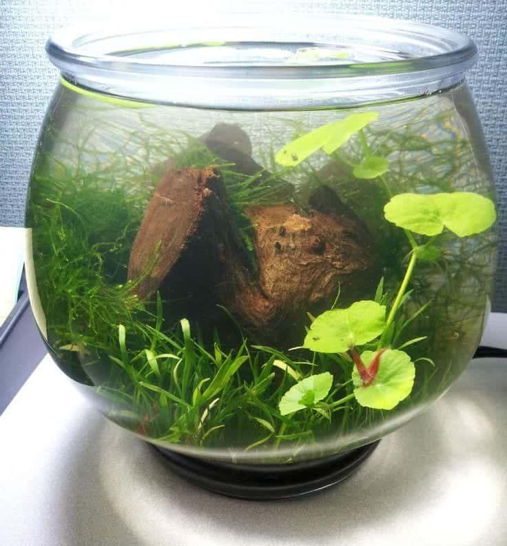 Self sustaining ecosystem home self sustaining ecosystem for Self sustaining garden with fish