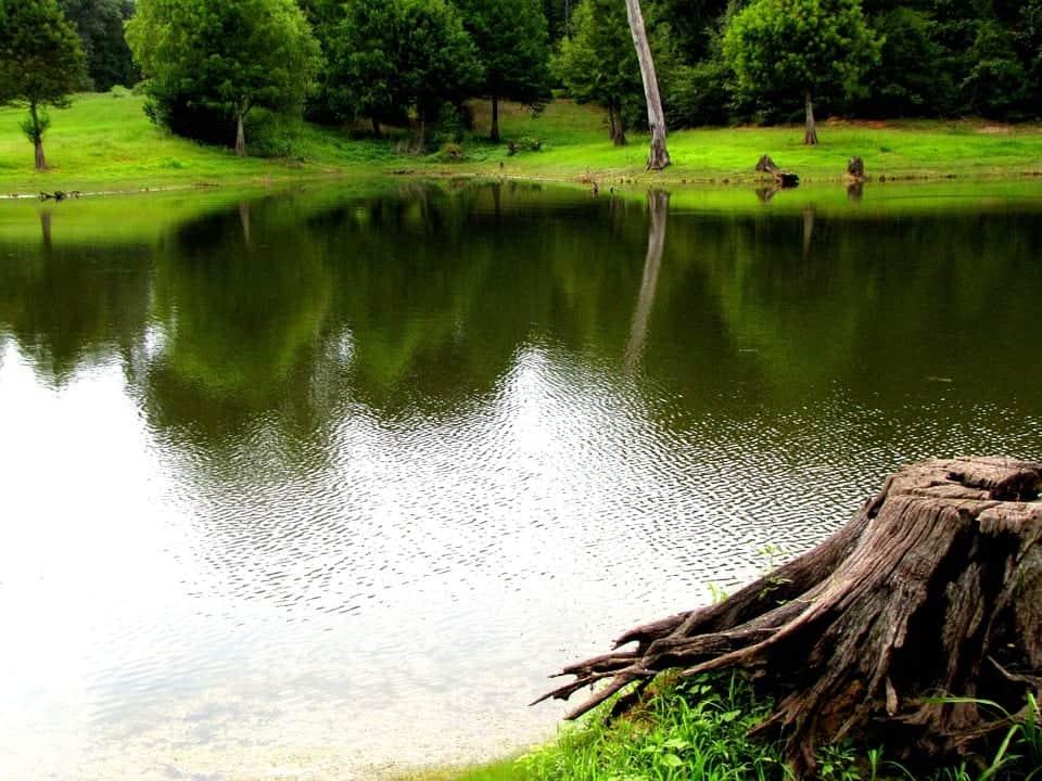 jar water pond