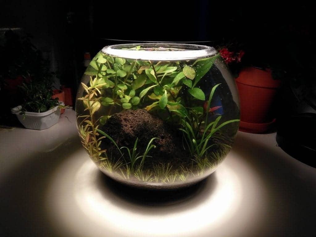 Self Sustaining Ecosystem Home Self Sustaining Ecosystem