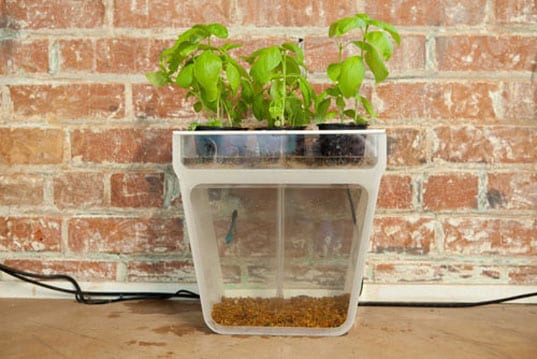 Back-To-The-Roots-Aquaponics-5