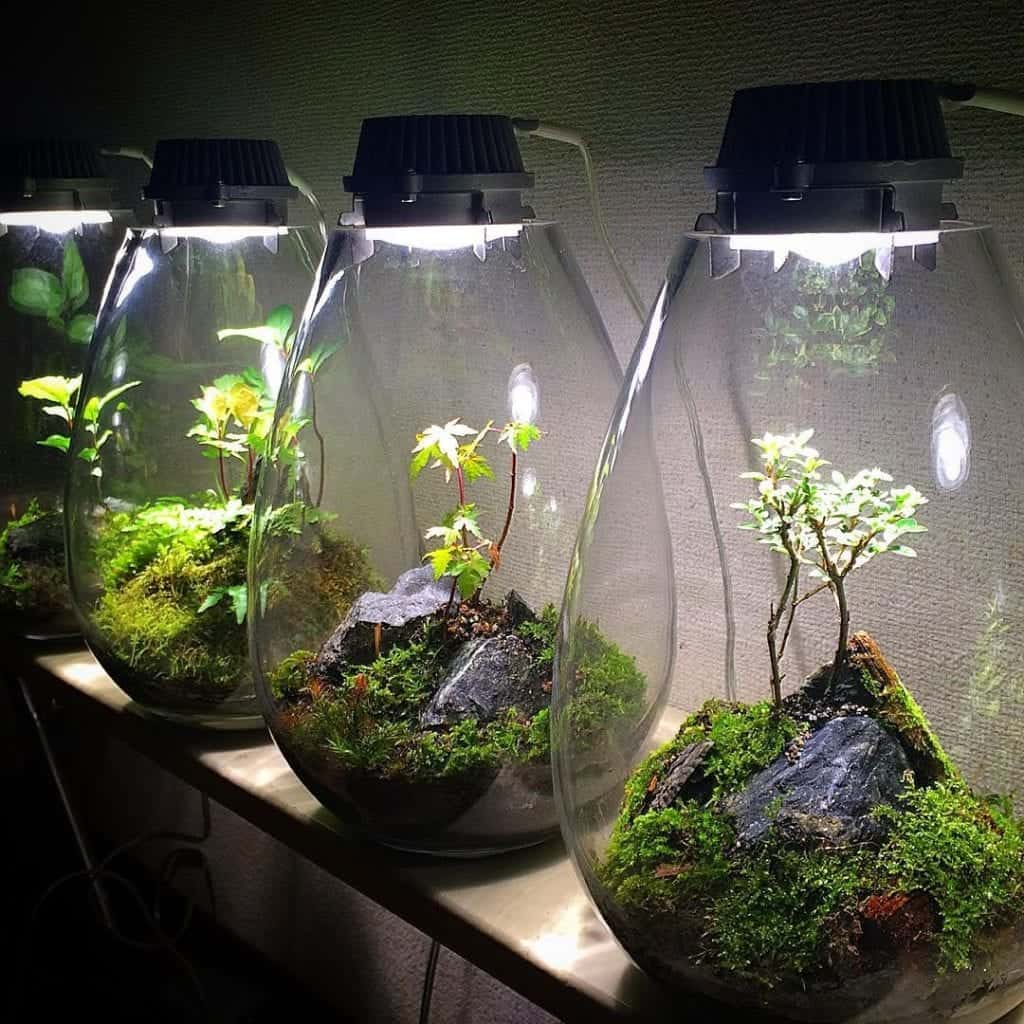 what is a terrarium?